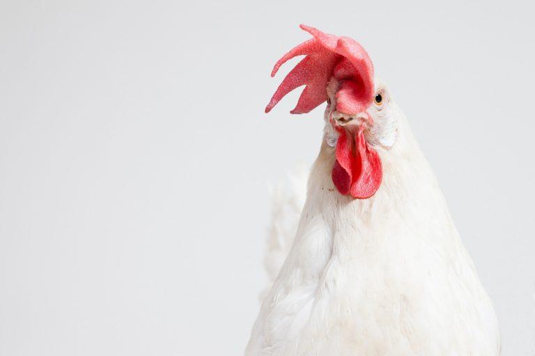 Hypnose – und dann gackere ich wie ein Huhn…